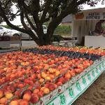 Van de Laar Orchards Foto