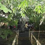 Photo of Garuda