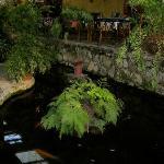 koi and turtle pond