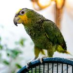 SUITE Restaurant's parrot Misha
