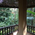 Forest View from Balcony (Family Deluxe Room on lower floor.