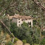 Sicht auf Son Bleda vom Olivenhain