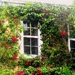 Bougainvillea surround the walls