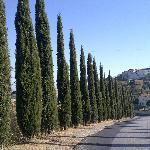 Bergje op bij Castellina Marittima