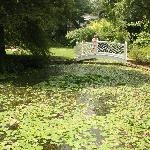 garden pond and bridge