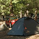 Site #83, Wawona Campground