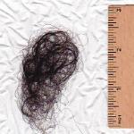 Shorter hairs found in shower