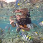 School of Fish at El Nido Resorts Miniloc