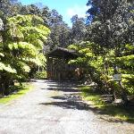 Hapu'u Forest Bungalow