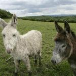 Donkeys at Hillview B&B