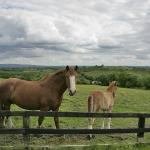 Horses at Hillview B&B