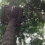 RAPPELLING AT OSA CANOPY TOUR