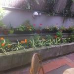 The Garden-3
