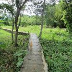 Walkway to the Jungle / Garden (With Mr.Miss, the lodge cat)