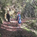 Llyal track walk Buller Gorge