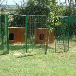 box dei cani