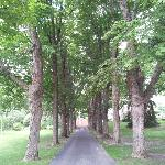 Tree-lined driveway up to the B&B