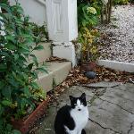 Cat in the neighbourhood