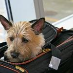 Se admiten mascotas / We are a pet friendly hotel
