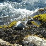 Baby sea lion we saw @ Nubble