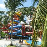 Water Slides through the Palms