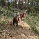 Despite the rough terrain, the horses were very easy to ride