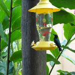 Humming birds were all over!