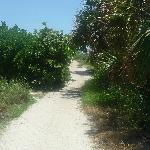 The path to the beach!!!!
