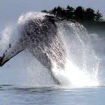 Stubbs Island Whale Watching Foto