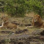 Encounter Mara, Asilia Africa Foto