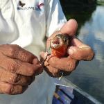 Piranha fishing!