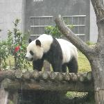Wow, so close with the panda!
