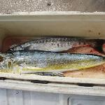 The mahimahi (masimasi) and barracuda caught by my husband and friends on viamoana's fishing cha