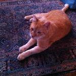 Il dolcissimo gatto/the so sweet cat