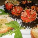 Speciality dish! Sea Urchins!