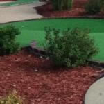 bush my golf ball got caught in