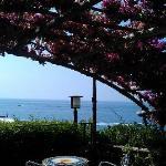 Breakfast terrace under the bougainvillea