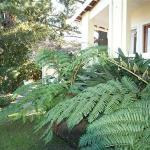Garden of Villa