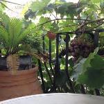 …il balcone della camera. Che buona l'uva!