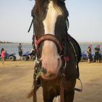 mio cavallo