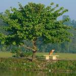 Relaxing @ Talangama Wetlands
