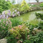 The outdoor koi pond