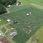 The Massive Maize Maze