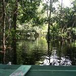 canoeing through the flooded forest