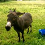 Sonny the donkey in the front yard!