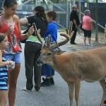 wisconsin dells deer park