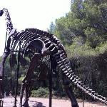 een recontructie van een dino skelet