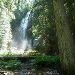 Proxy Falls July/12 taken from bottom of gorge