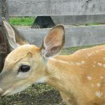 Dutch Creek Farm Animal Park Foto