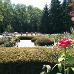 Richmond Rose Garden
